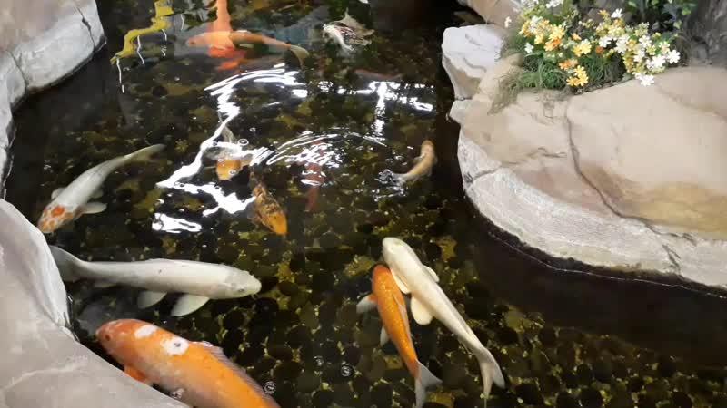 Москва,МКАД,Осташковское ш. магазинПланета железяк аквариум.