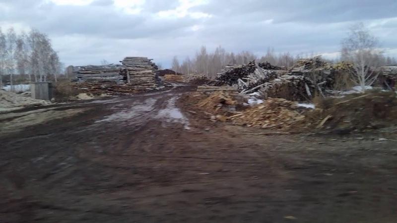 Как китайцы из Сибири делают пустыню!