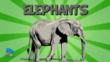 The Elephant Educational Video for Kids.