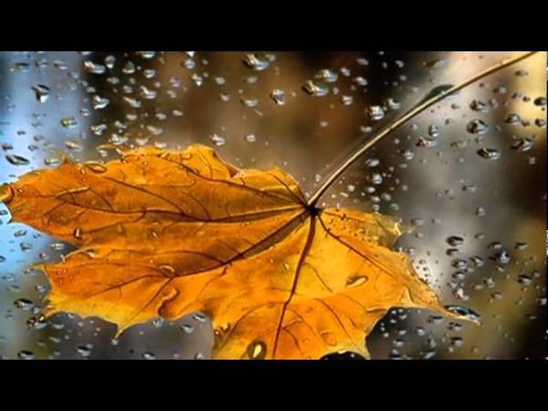 Листья желтые.