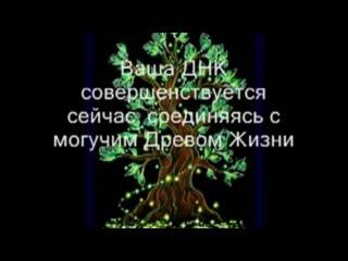 Активация Денежного Древа Жизни