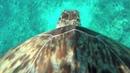 Взгляд морской черепахи на риф. Animal Planet