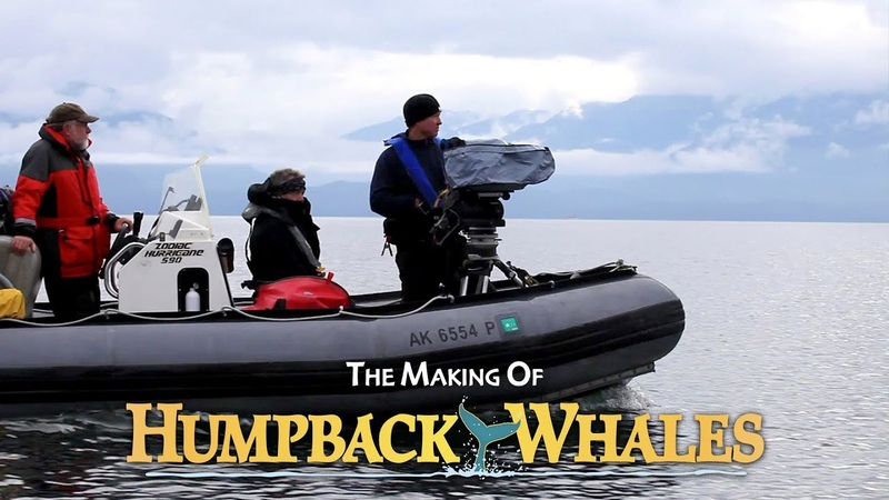 The Making of IMAXs 'Humpback Whales' Singing, Sounds, Feeding Rescue