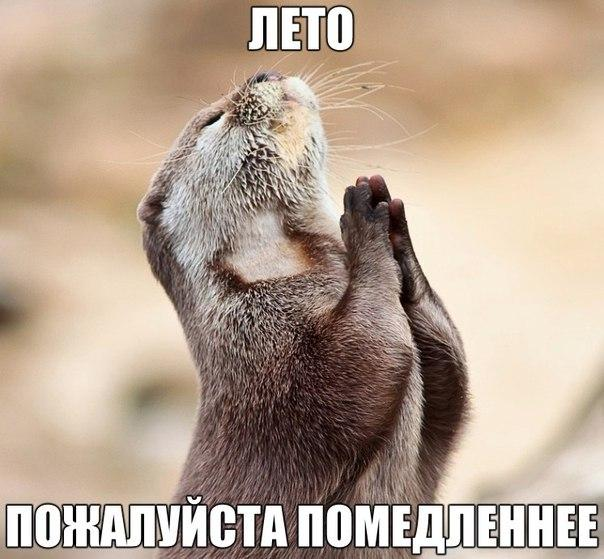 Фото №424996342 со страницы Андрея Заводовича