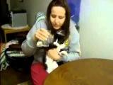 Смешное видео  Кот пьет воду из стакана очень жадно, отбирая у хозяйки