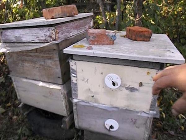 работа с пчелами осенью - как подсилить слабый отводок или семью осенью
