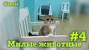 Приколы с котами и собаками, Лучшая подборка приколов с смешными животными! 4
