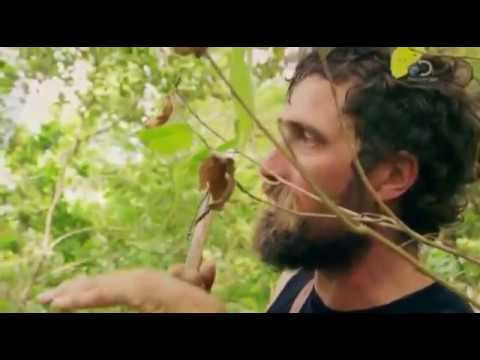 Discovery: Дикая кухня 1 сезон 4 серия