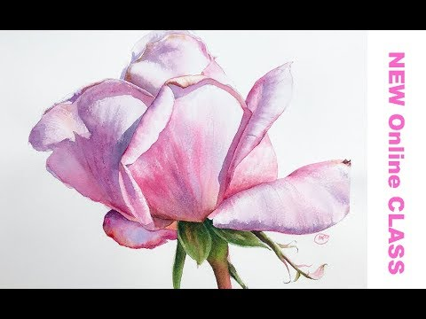 Watercolor ROSE - Preview ONLY for ONLINE CLASS