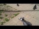 Кормление городских голубей