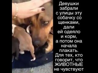 Люди и животные. История любви.
