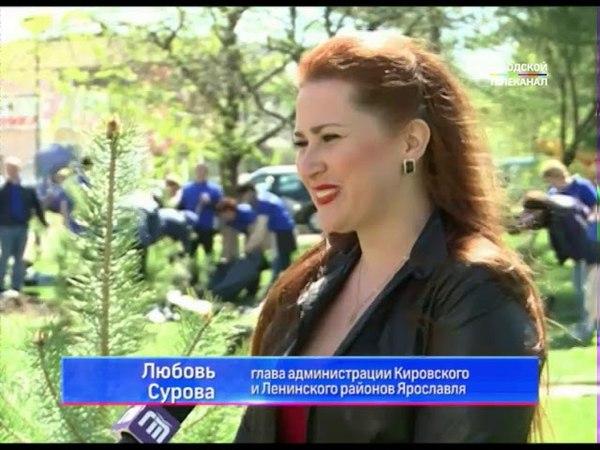 В Ярославле на улице Советской появилась аллея из хвойных деревьев