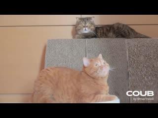 Cats vs robot vacuum