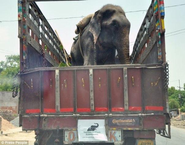 Слон, которого 50 лет держали в цепях, заплакал после освобождения