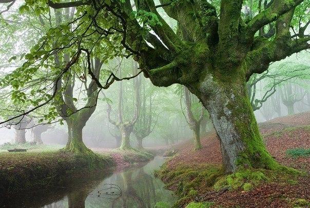 Сказочный лес в Сьерра-Неваде, Испания