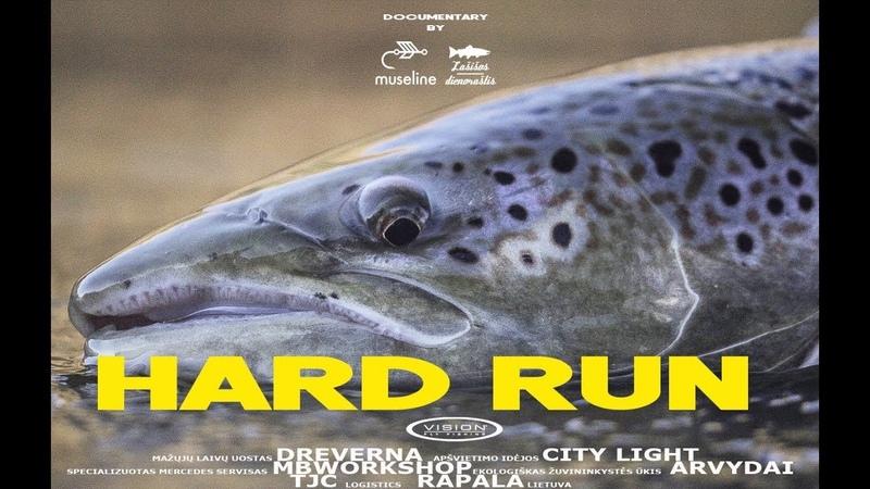 HARD RUN - Salmon run in Lithuania