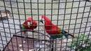 Попугаи в поляне сказок