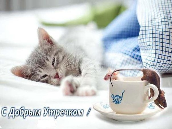 с добрым утром котики картинки