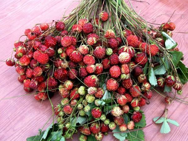 клубника выращивание в теплице круглый год