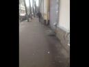 Роман Пожидаев Live