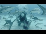 GoPro: Shark Feeding with Andy Casagrande in 2.7K