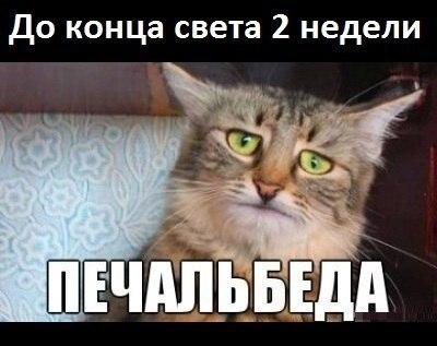Забавные животные - Страница 4 XESmvc1yECU