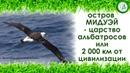 Остров Мидуэй или царство альбатросов