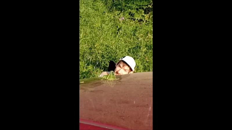 Кузнечик на машине или летний день в лесу