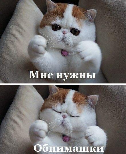 http://cs413031.vk.me/v413031089/1ea7/vtEvazd96tA.jpg