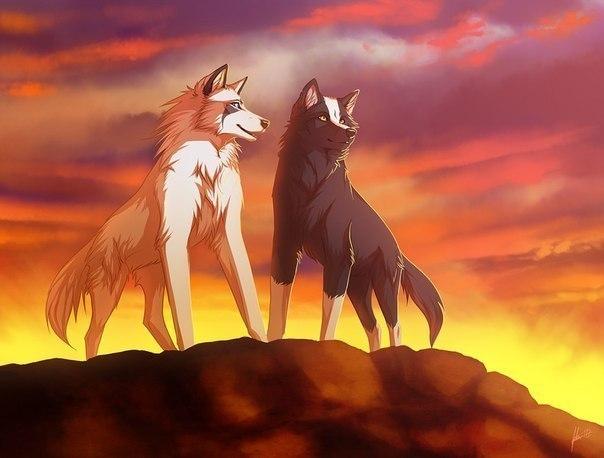 смотреть картинки аниме волков: