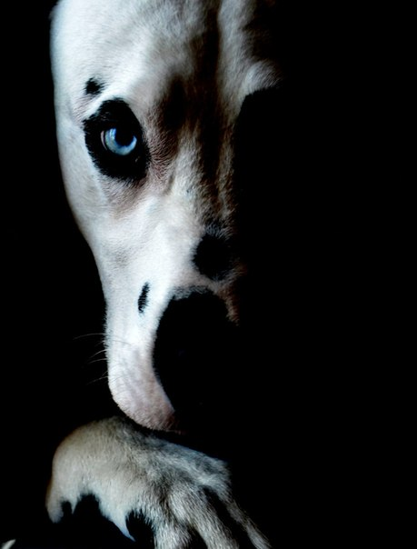 Куплю далматинку с голубыми глазами и черными пятнами!! UXw_Lx3rpRg