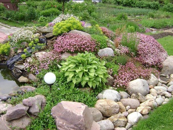 ????????АЛЬПИЙСКАЯ ГОРКА - украсьте Ваш сад!    Альпийская...