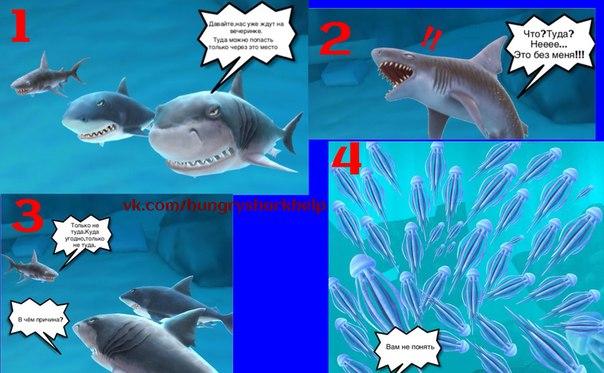дунклеостей фото акулы