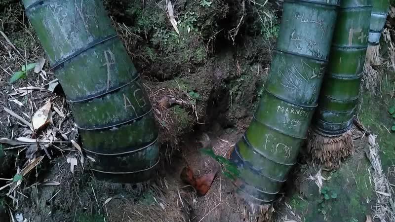 Роман Микрюков Грузия История про бамбук