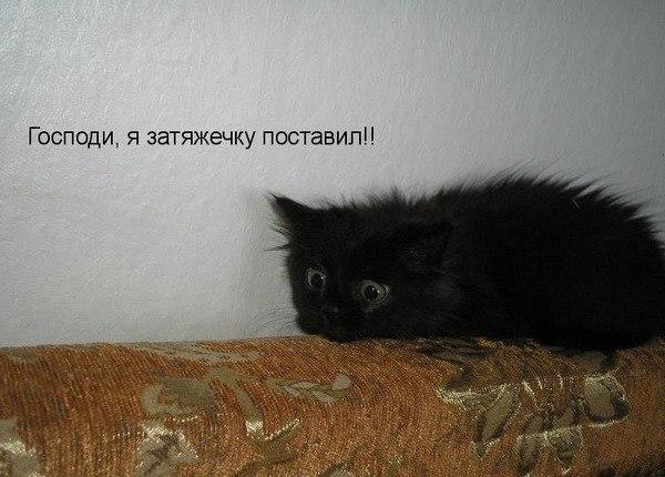http://cs410329.userapi.com/v410329196/2eed/INP0Pb1Xqvs.jpg