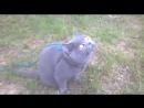 Бандик Plush Blue Ray на охоте