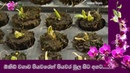 Orchid cultivation step by step