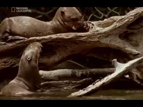Путешествие в Амазонию МИР ВОДЫ