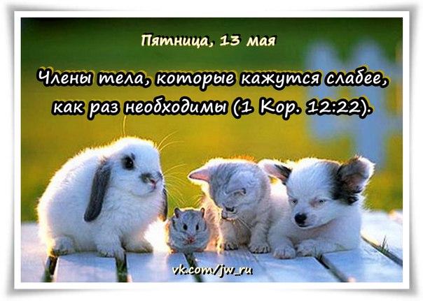 Исследуем Писания каждый день 2016 - Страница 5 O_4qH6Ta6N0