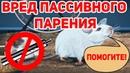 ВРЕД ОТ ПАССИВНОГО ПАРЕНИЯ МУЛЬТФИЛЬМ | Passive Vaping A guide for parrots