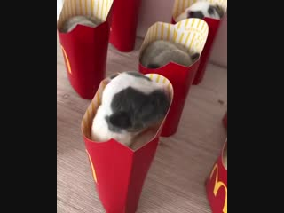 Спящие щенки в коробке от картошки фри