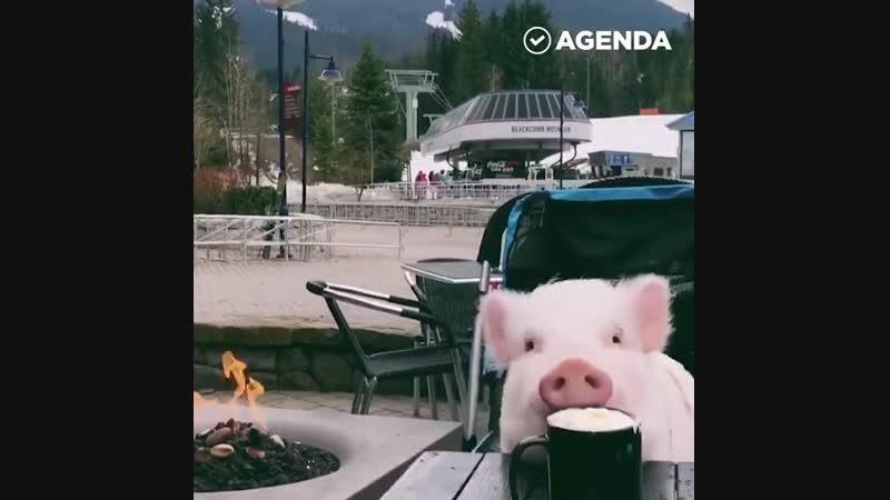 Свинка и горячий шоколад - Личный повар