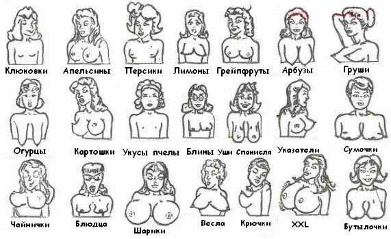 Грудь, Женская грудь, Красивая грудь