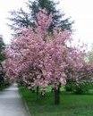 Автор: Admin Дата: 04.11.2013 Описание: Цветы и деревья из бисера - Деревья из бисера.