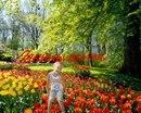 Весна уже настала.  Алла Скоморохова.