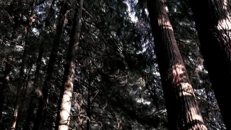 Вендиго из сериала Сверхъестественное _ Supernatural (методы борьбы, способности