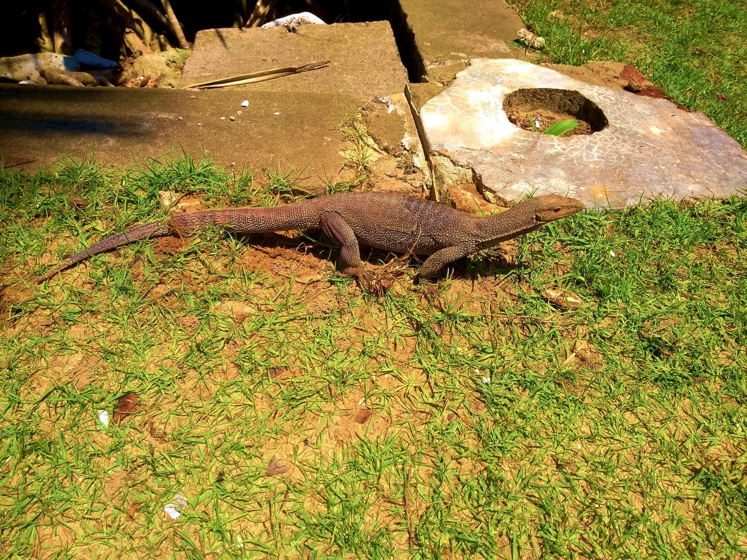 Шри Ланка (фото) - Страница 9 ZIWSkwGrIa8