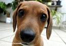 Собака является лучшим утешителем потому, что не спрашивает, отчего у вас плохо.