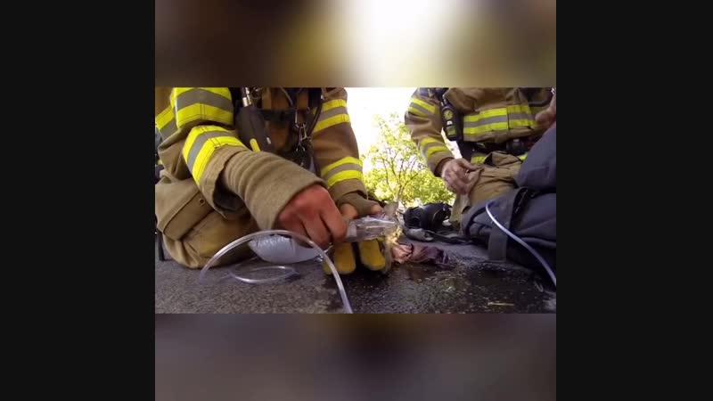 Спасатели спасли жизнь умирающему котёнку, до слёз.. Уважение таким! ч.2