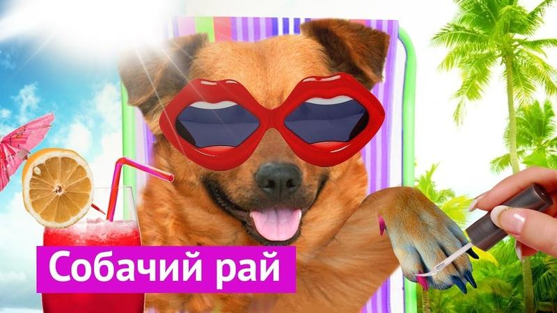 Город удобный для собак Илья Варламов